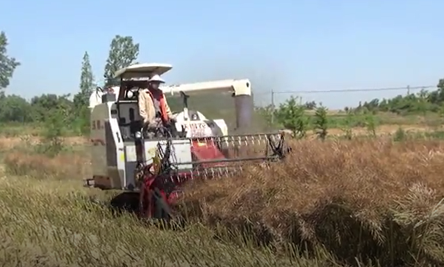 RUILONG HARVEST RAPE